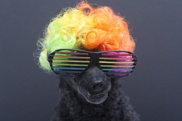 dog in 80's costume