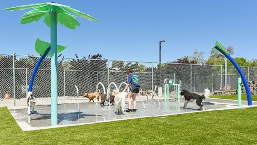 staff member playing with dogs on the splash pad