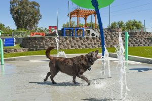dog playing on the splash pad